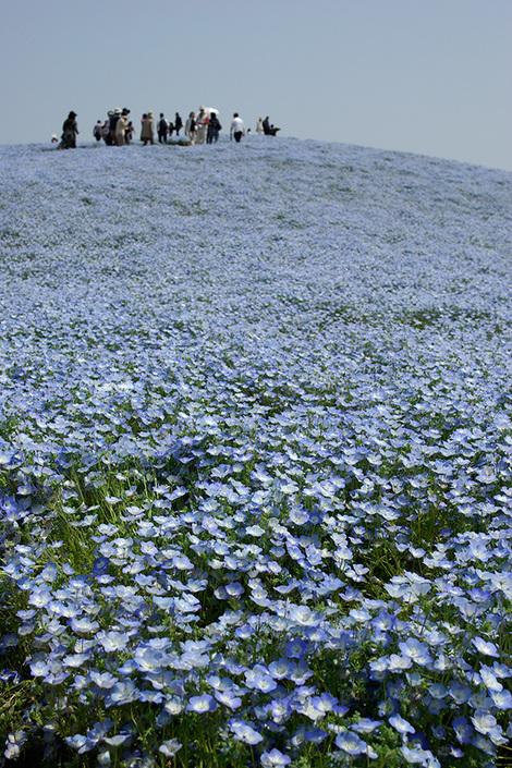 Hitachiseasidepark_may2009048m