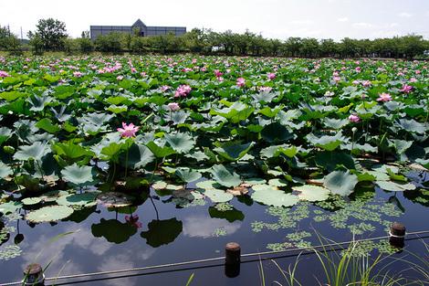 Hojotsukuba_aug2011095m