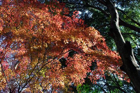 Takasakiforest_dec2011042m