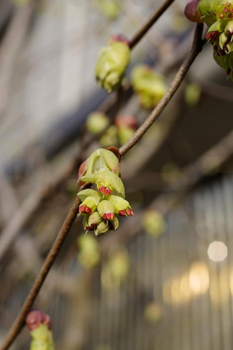 Springhome_mar2012043m