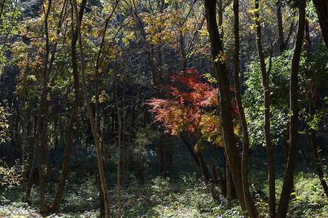 Takasakiforest_nov2012056m