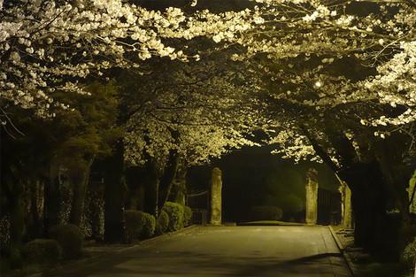 Kumamoto_mar2013006m