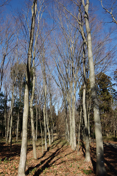 Takasakiforest_jan2014013m