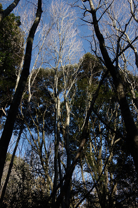 Takasakiforest_jan2014041m