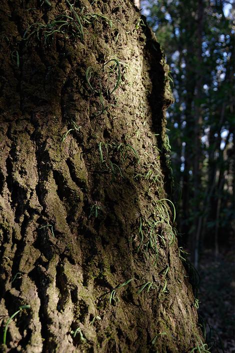 Takasakiforest_jan2014084m