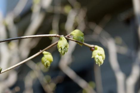 Springhome_mar2014_0002m