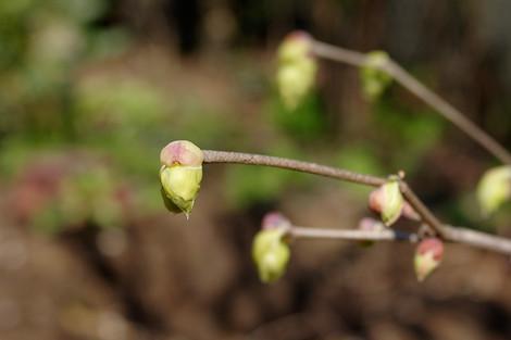 Springhome_mar2014_0007m