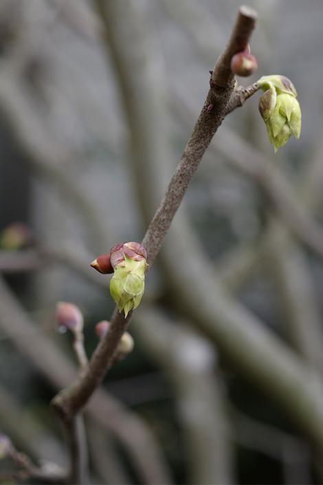 Springhome_mar2015_0018m