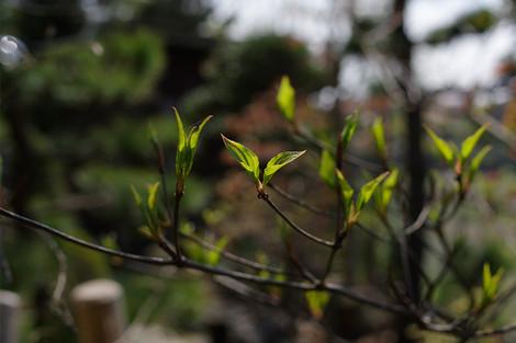 Springhome_apr2015_0042m