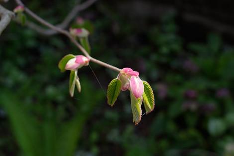Springhome_apr2015_0063m