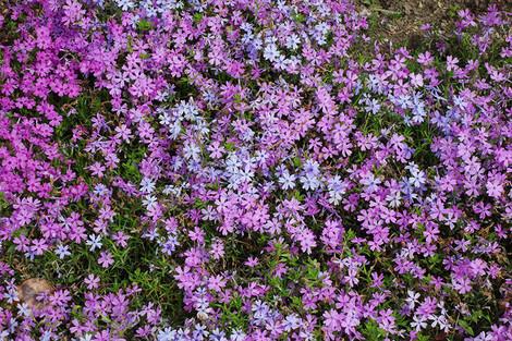 Springaroundhome_apr2017_0024m