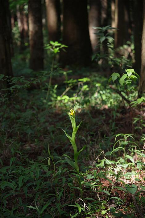 Ryugasakiforestpark_may2017_0013m