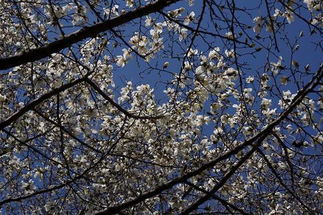 Springaroundhome_mar2018_0012m