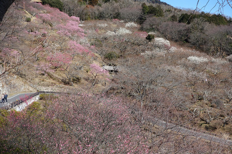 Mttsukuba_umegarden_feb2019_0025m