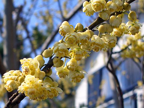 Spring_26Mar2005_032m