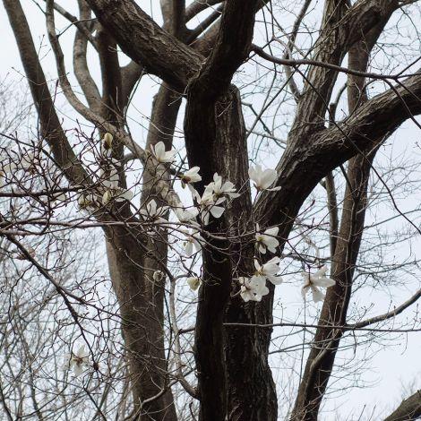 Springaroundhome_mar2019_0007m_1