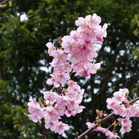 Takasakiforest_mar2019_0013m