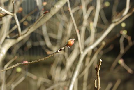 Springhome_feb2007051m
