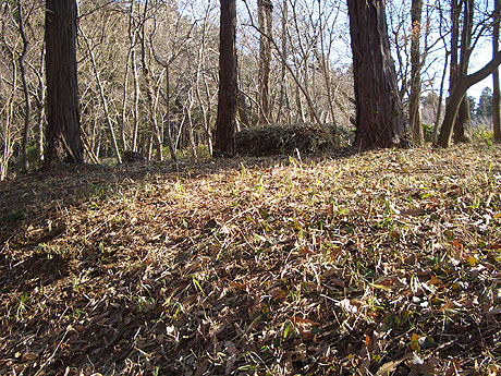 Ushikunaturefield_feb2007008m