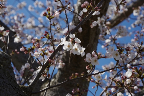 Shinchiushiku_mar2020_0006m