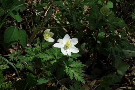 Springaroundhome_apr2020_0057m