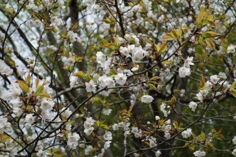 Springaroundhome_mar2020_0057m