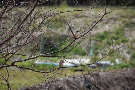 Springaroundhome_mar2021_0170m