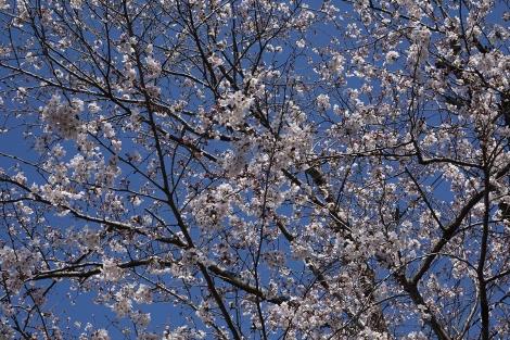 Springaroundhome_mar2021_0388m