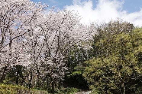 Springaroundhome_mar2021_0440m