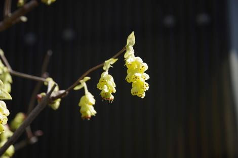 Springhome_mar2020_0040m