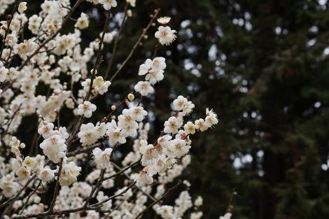 Ushikunatureforest_feb2021_0013m