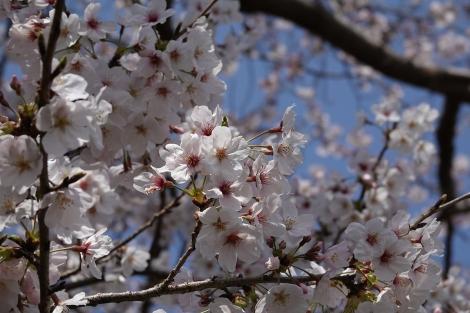 Ushikushinchi_mar2021_0031m